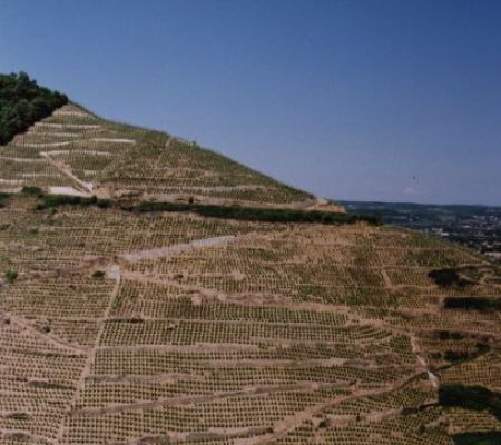 Saint-Joseph spot, steeply hillsides. This great spot gave birth to the name of the Appellation.