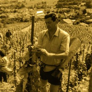 Pierre Coursodon has always been convinced of the potential of the terroir from the Saint-Joseph wines