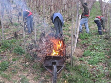 During winter time, we pick up the vine shoots and we burn them to maintain the sanitary state of the vineyards.